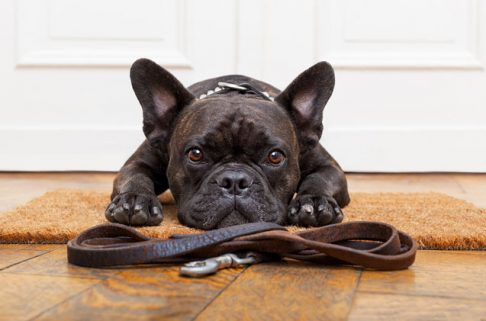 10 Steps To Train Your Dogs and Puppies